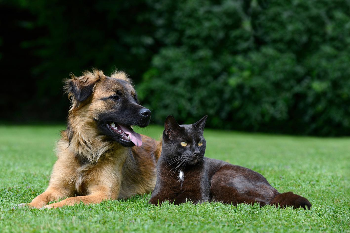 croquettes-kalina-chien-et-chat
