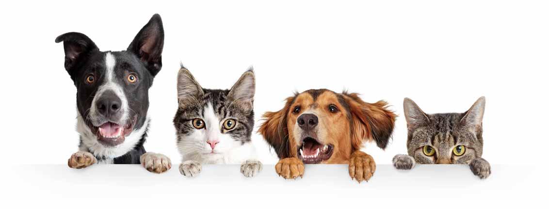 chats-et-chiens
