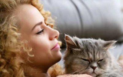 Ronronnements apaisants… pour votre chat et vous !