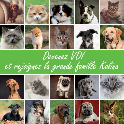 visuel_kalina_grille_chiens_vdi