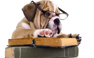 Attention aux fausses bonnes idées sur nos amis les chiens !